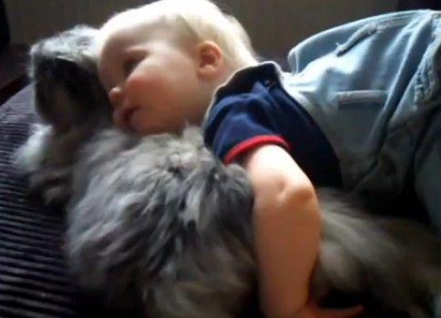 ネコの毛触りを堪能する赤ちゃん