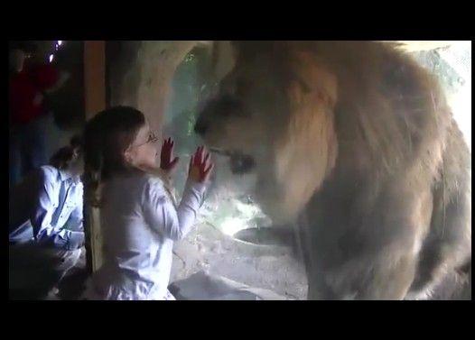 幼女を食べようとするライオン
