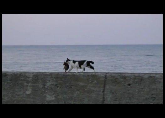 海辺を歩くネコの親子