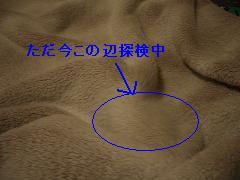 8befadb0.jpg