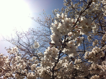 2013-03-24 11:17:51 写真2