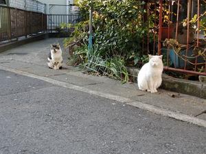 (猫2匹2)