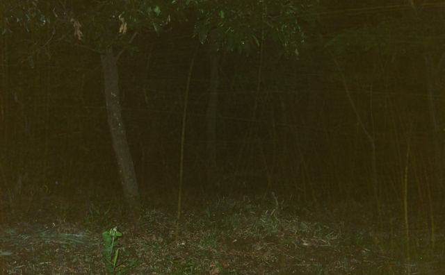 【不気味な話】赤い服を着た人が林の中に入って行くのを見た