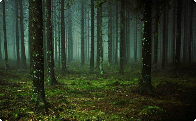 森林、暗い山