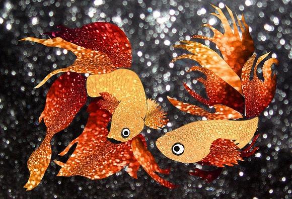 glitter-goldfish-1312463_960_720