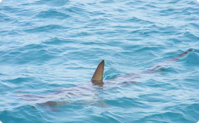 【サメの恐い話】先生がいきなりチャプッと沈みました。