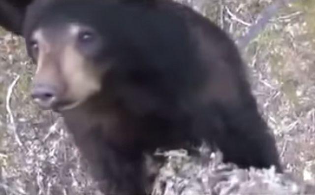 【熊】渓流釣り