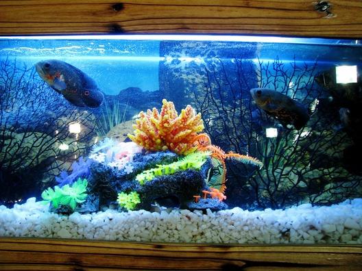 aquarium-390745_1920