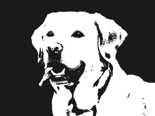 labrador-1334196_960_720