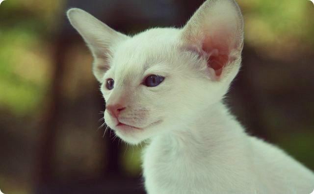 白猫【心霊ちょっといい話】帰ってきたシロ