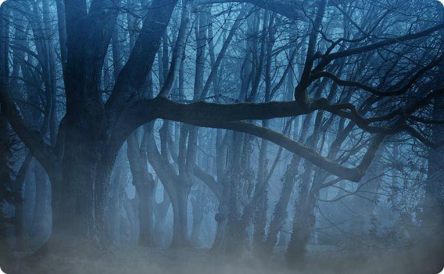 不気味な森