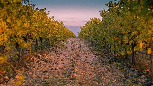 vineyard-3831442_960_720
