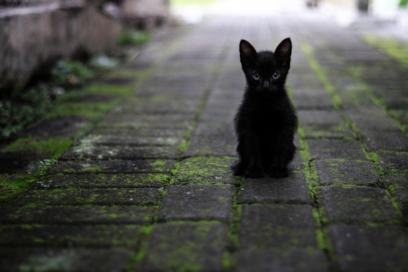 cat-3169476_1920