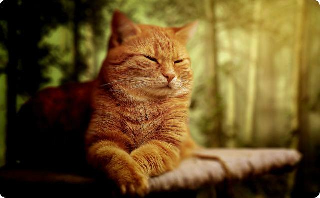 【切ない話】リアル『猫の恩返し』