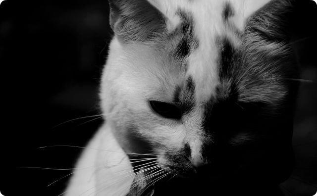 猫、切なくて怖い話