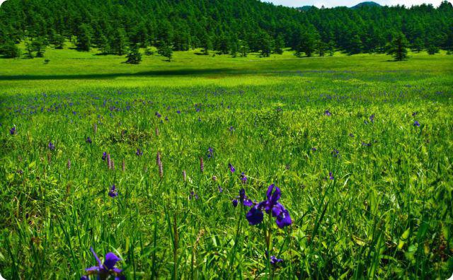 田舎、田園