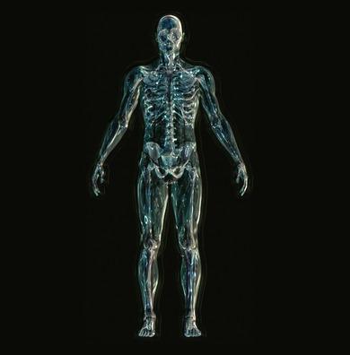 skeleton-1243818_1920
