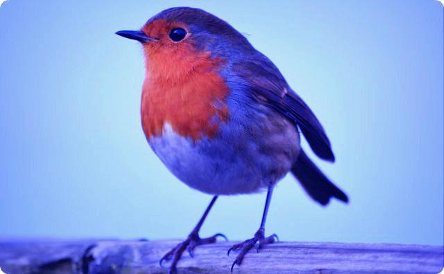 【鳥】鳥が道案内してくれた【不思議】