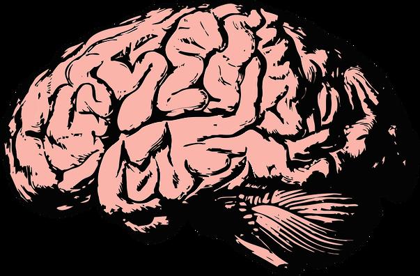 brain-2845862_960_720