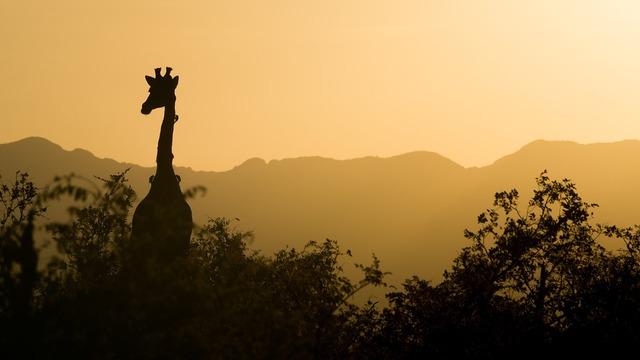 giraffe-2233366_960_720