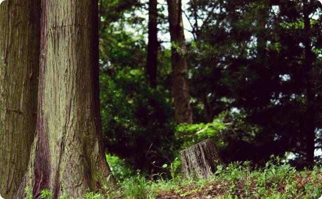 ゾッとする話-杉の木-作業服