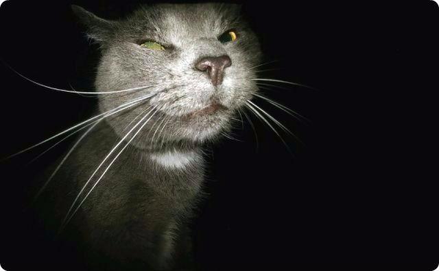 猫、不可解