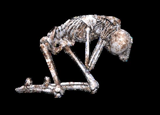 skeleton-1940283_960_720