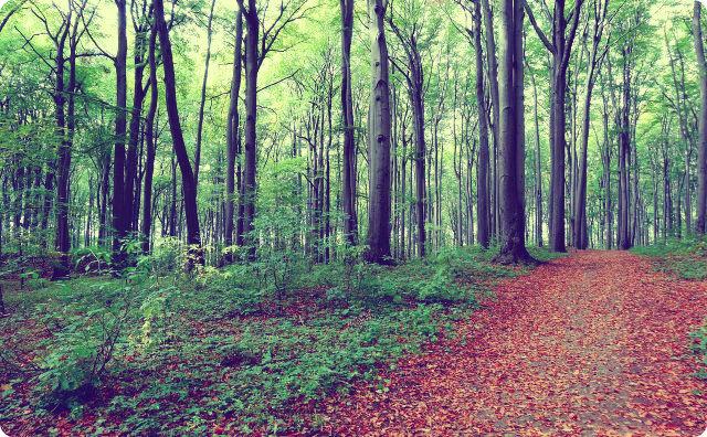 木、森、後味の悪い話