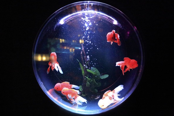 fish-bowl-846060_1920