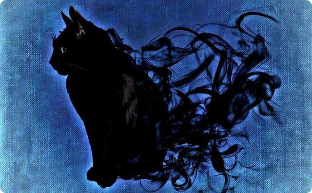 猫、神秘的