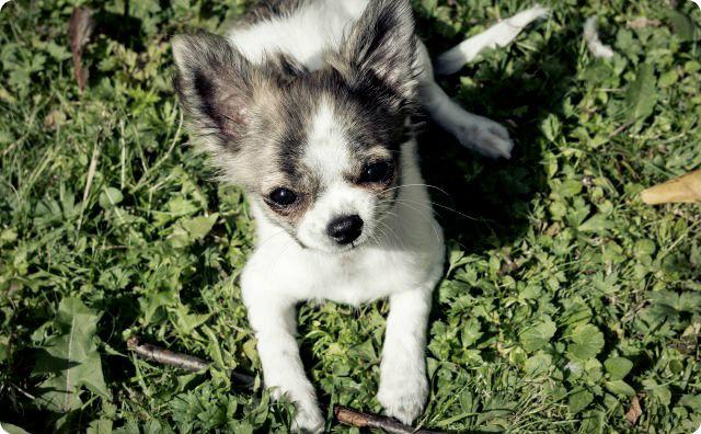 犬の赤ちゃん