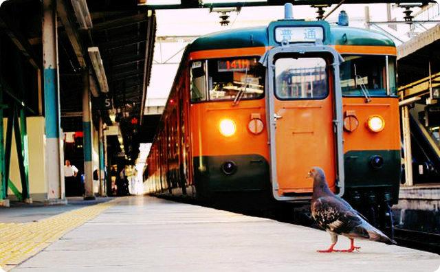 電車、人身事故、怖い話