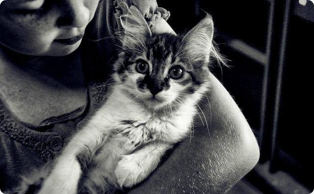 ネコと女の子