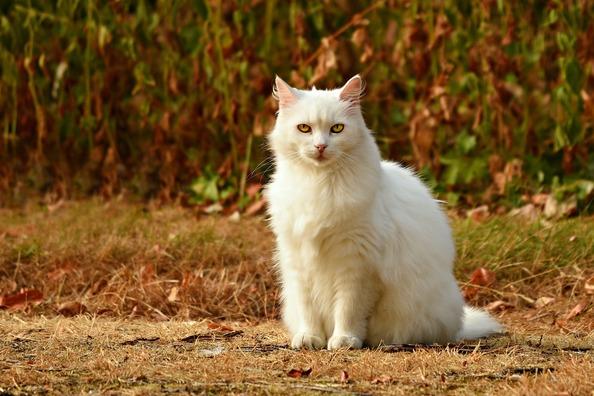 cat-3591348_1920