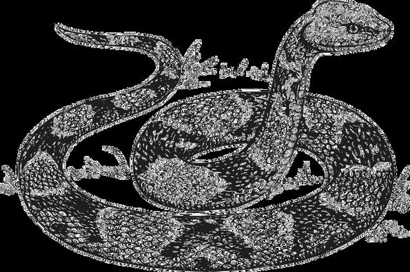 snake-48155_960_720