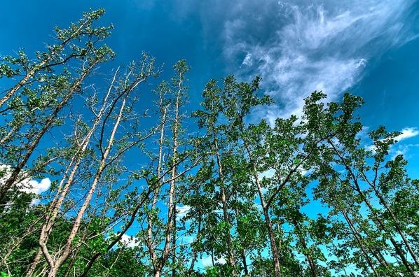 mangrove-5873484_960_720