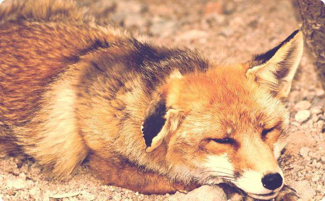 狐、神社、田舎