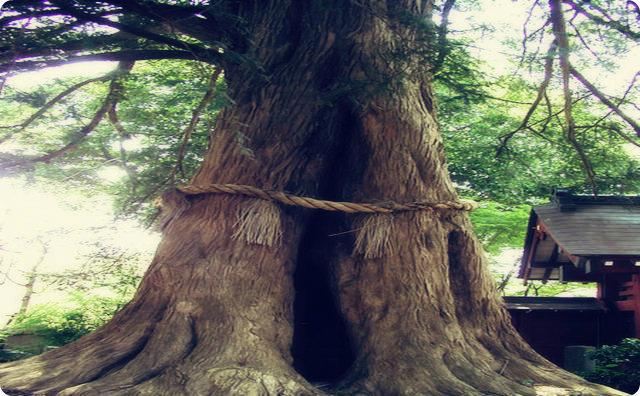 御神木-縄文時代の光景を目にしたことがある