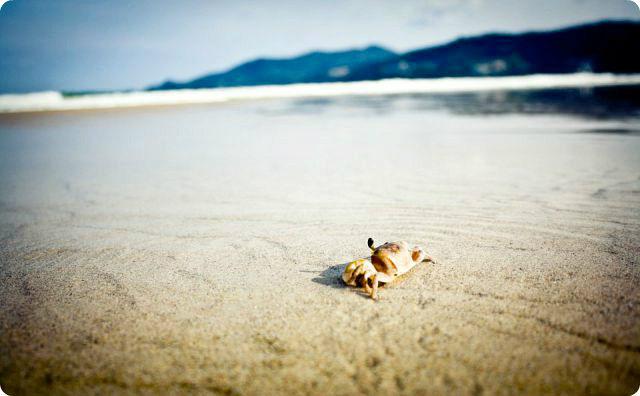浜辺、カニ