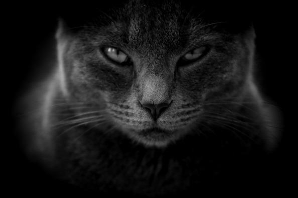 cat-3386220_960_720