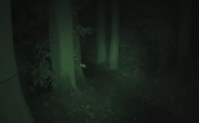 真っ暗な山道を車で走っていた時とんでもないものを見た