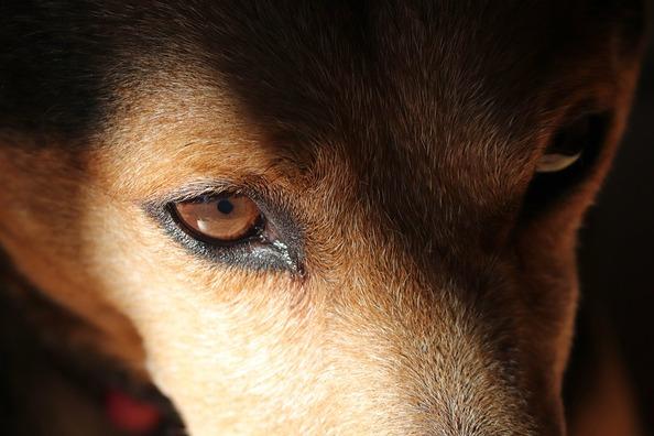 dog-eyes-4965102_960_720