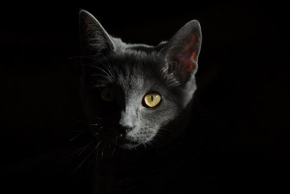 cat-778315_1920