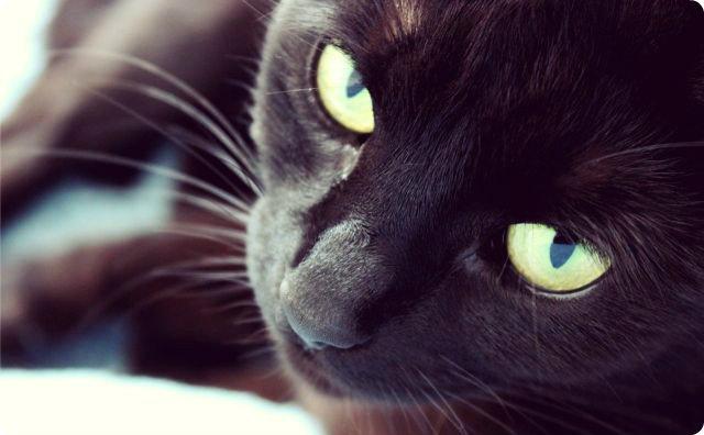 猫-幽霊-笑える霊体験