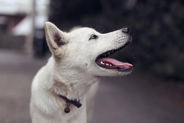 puppy-4298756_960_720