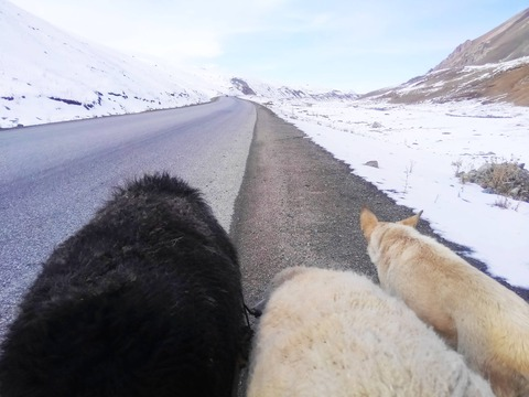 羊飼いになりたくて、中央アジアで羊と野宿旅を始めることにしたバカだけど【後編】