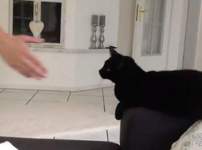 cat hi five