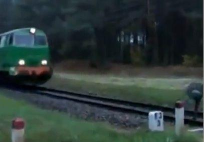 train chiken