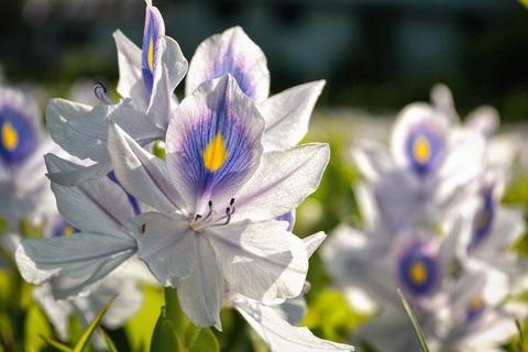 flower-field-1534832_1280
