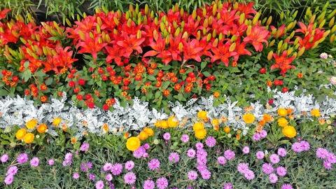flower-garden-1426147_1280